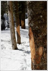 We saw lots of signs of deer - their spore, footprints, and lots of tree damage.