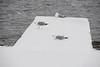 Seagulls onn dock at Herchimer boat launch.