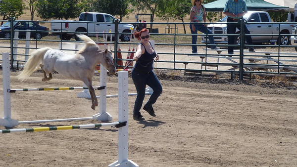 Jennifer taking Appy through the Jumping Course at the SoCal Horse Show.
