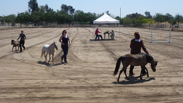 The contestants for the Jumping Course at the SoCal Horse Show.
