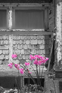 Flowers and Shingles, Crystal Cove SP CA