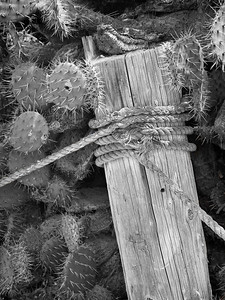 Post and Rope with Cactus, Crystal Cove SP CA