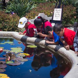 """What Bees?"", Mission San Juan Capistrano, CA"