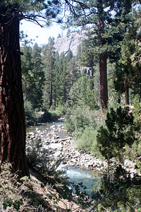 7/7/07 Leavitt Trail (view of West Walker River after crossing bridge from Leavitt Meadows Campground). Off Sonora Pass Road (Hwy 108), Toiyabe National Forest, Mono County, CA