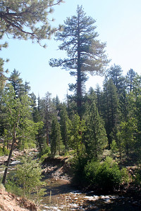7/7/07 View of West Walker River from Leavitt Meadows Day Use/ Trailhead parking area. Off Sonora Pass Road (Hwy 108), Toiyabe National Forest, Mono County, CA