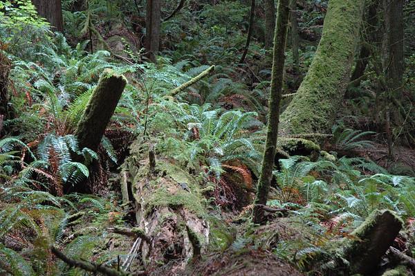 Foliage in East Sooke park.