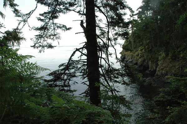 Glimpse of a cove off of Sooke harbour.