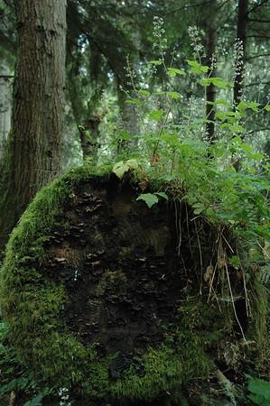 Felled tree.