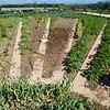 Paestum: Tenuta Vannulo: Organic garden
