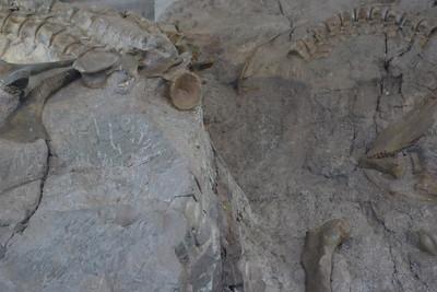 Dinosaur Quary - 18