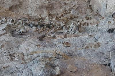 Dinosaur Quary - 14