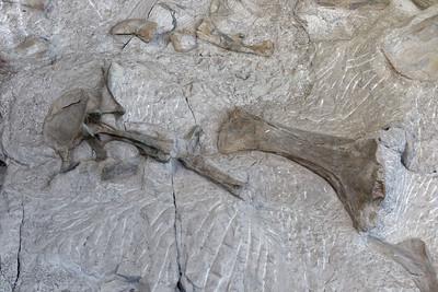 Dinosaur Quary - 25