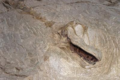 Dinosaur Quary - 28