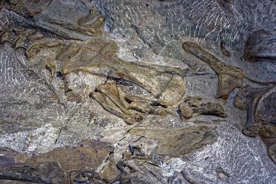 Dinosaur Quary - 22