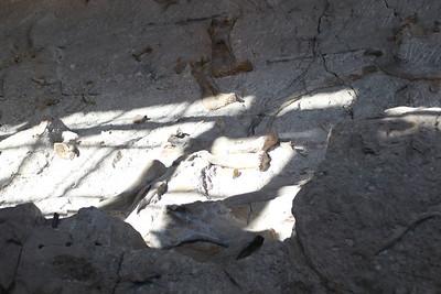 Dinosaur Quary - 06
