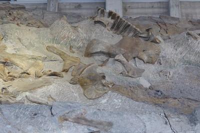 Dinosaur Quary - 12