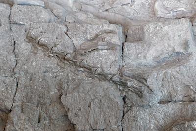 Dinosaur Quary - 38