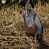 South_Africa_Birds_03