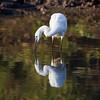 South_Africa_Birds_05