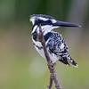 South_Africa_Birds_04