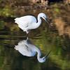 South_Africa_Birds_06
