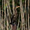 South_Africa_Birds_09