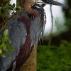 South_Africa_Birds_01