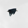 South_Africa_Birds_13