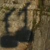 040 Cable Car Shadows