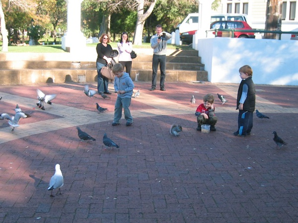 004 Squirrels and Pigeons and Gulls, Oh My!
