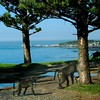 023 Baboons in the Trees