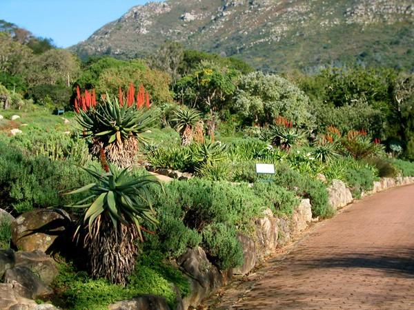 009 Kirstenbosch Gardens