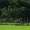 038 Ostrich Farm