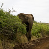 South_Africa_Elephant_01