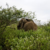 South_Africa_Elephant_10