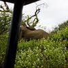 South_Africa_Elephant_09