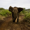 South_Africa_Elephant_03