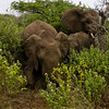 South_Africa_Elephant_19