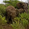 South_Africa_Elephant_19