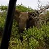 South_Africa_Elephant_11