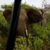South_Africa_Elephant_14