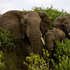 South_Africa_Elephant_17
