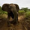 South_Africa_Elephant_06