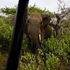 South_Africa_Elephant_12