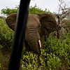 South_Africa_Elephant_13