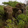South_Africa_Elephant_18