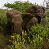 South_Africa_Elephant_18