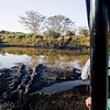 South_Africa_Hippo_01