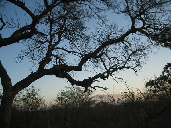 016 Leopard Sunset