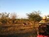 039 Impala Herd